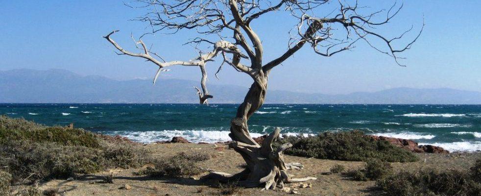 Isola di Chrissi