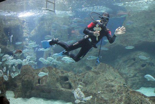 A Creta, anche un grande acquario: il Cretaquarium